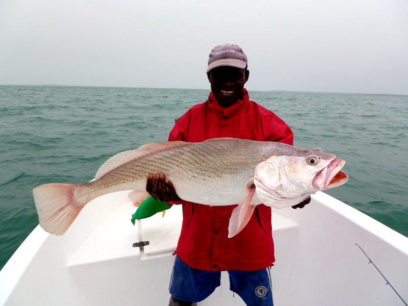 grosse-otolithe-guinee-bissau-world-predator-fishing
